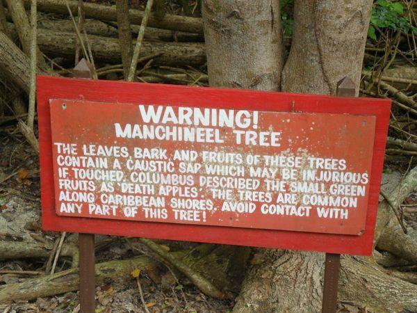 Loài cây giết người kinh dị nhất thế giới, đứng cạnh thôi cũng có thể mất mạng