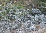 Dự báo thời tiết ngày 6/2: Vùng núi cao đề phòng băng giá, sương muối gây hại