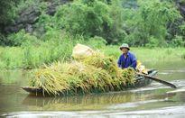 Thuận với tự nhiên