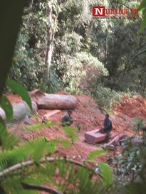 Lâm tặc ngang nhiên khai thác gỗ trái phép ở Quảng Nam – Kỳ 1
