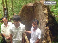 Bắt 10 đối tượng liên quan đến vụ phá rừng đặc dụng Bà Nà - Núi Chúa