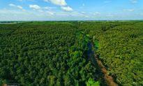 Độc đáo con đường dài 5km xuyên rừng tràm ở Long An