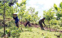 Mức khoán thấp, người dân không mặn mà với việc trồng rừng phòng hộ, đặc dụng