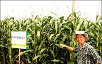 Cây trồng biến đổi gen cần sớm được triển khai trên diện rộng