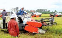 Nông nghiệp ĐBSCL: Tiên phong mô hình sản xuất lớn