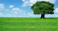 Người nhớ quê cây nhớ đất