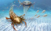 Dấu vết tồn tại của loài 'quái vật biển' khổng lồ