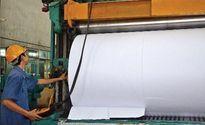 Sojitz dời dự án bột giấy từ Quảng Ngãi về Quảng Ninh?