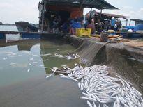 Đổ cá chết ra cổng nhà máy để phản đối việc xả thải gây ô nhiễm môi trường