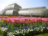 Ghé thăm những vườn hoa nổi tiếng trên thế giới