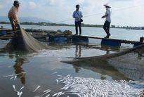 Ô nhiễm, hàng tỷ đồng trôi theo cá chết