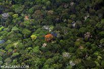 Có bao nhiêu loài cây trong rừng mưa nhiệt đới?