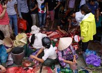 Chọi trâu Đồ Sơn 2015: Nghìn người chen chúc bỏ tiền triệu mua thịt trâu chọi