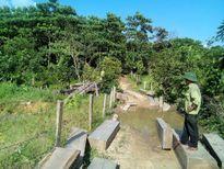 Gỗ lậu sát trạm bảo vệ rừng