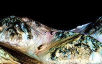 NASA công bố phát hiện quan trọng, gây kinh ngạc về Sao Hỏa