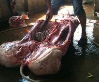 Kinh hoàng lợn bị xuất huyết thành thịt quay thơm ngon