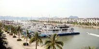 Đưa Cảng tàu du lịch quốc tế Tuần Châu vào hoạt động