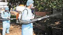 Bùng phát dịch sốt xuất huyết ở Nghệ An