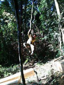 Tung ảnh phá rừng lên Zalo để làm kỷ niệm