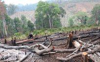 Chặt rừng làm dự án: Không trồng lại thì rút giấy phép