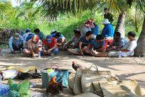 Tin tức pháp luật ngày 1/11: Bắt quả tang 21 đối tượng đá gà ăn tiền ở Trà Vinh