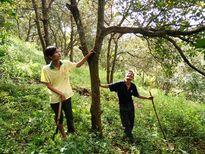 Tái cơ cấu nông nghiệp Đăk Nông: Nâng cao giá trị cây điều