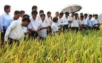 IPO gần 2 triệu cổ phần của Giống cây trồng Hải Dương tại HNX