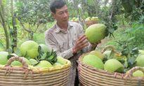Trái cây ĐBSCL xuất khẩu sẽ cán mức 2 tỉ USD/năm