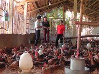 Chăn nuôi thành công nhờ khóa tập huấn của Hội