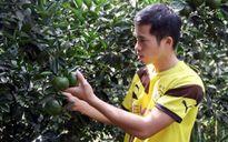 Thu lãi hàng trăm triệu nhờ trồng cam
