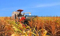 Đầu tư nông nghiệp thời TPP