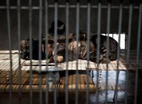 Cảnh hành hung động vật kinh hoàng ở các trang trại khổng lồ