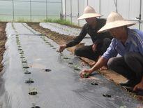 Tái cơ cấu nông nghiệp: Khởi sắc nhờ công nghệ Nhật Bản