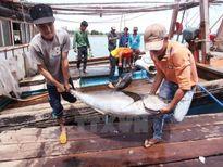 Sản lượng thủy sản 11 tháng ước đạt hơn 5,8 triệu tấn