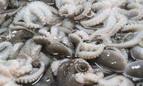 Siết chặt thủy sản bẩn nhập khẩu từ Đài Loan vào Việt Nam