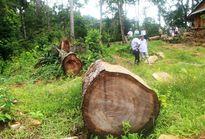 Gian nan cuộc chiến giữ rừng