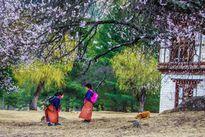 Những khoảnh khắc tuyệt đẹp ở xứ sở cổ tích Bhutan