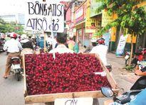 Hoa atiso đỏ chữa bách bệnh hay chỉ giải nhiệt?