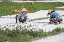 Nét nhọc nhằn người lao động làng miến Cự Đà