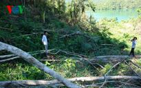 Bình Thuận sẽ xử lý nghiêm vụ phá rừng thủy điện Đa Mi