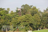 Kỳ lạ cụ ông 40 năm dựng 'lâu đài' 10 tầng để nghe chim hót