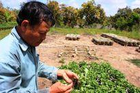 Thiệt hại 2 tỷ USD mỗi năm do phân bón, thuốc bảo vệ thực vật giả