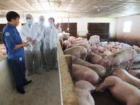 10 năm chăn nuôi Việt Nam phát triển và hội nhập