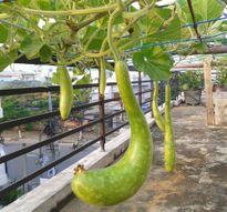 5 bước trồng rau sạch tại nhà theo bí quyết của Bác sĩ ung bướu