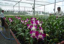 Đà Nẵng: Tái cơ cấu, nâng cao năng suất sản xuất nông nghiệp