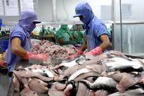 Hiệp hội cá tra cân nhắc khởi kiện Mỹ ra WHO