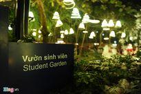Khu vườn Noel đẹp lộng lẫy của sinh viên Thăng Long