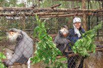 Vườn Quốc gia Cúc Phương (Ninh Bình) đẩy mạnh công tác bảo vệ và khai thác du lịch