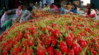 Xuất khẩu rau quả năm 2015 có thể cán đích 2 tỷ Đô