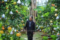 """Lão nông """"điên"""" với cây trồng 10 loại quả """"siêu lạ"""" ở Hà Nội"""